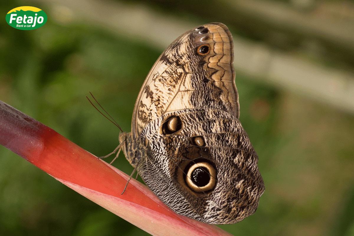 butterfly-mariposario-benalmadena-fetajo-rent-a-car-opel-vivaro-rent-a-car-malaga